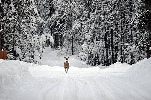 deer-1605673__340